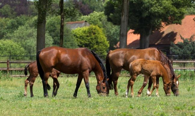 paarden_kudde_2